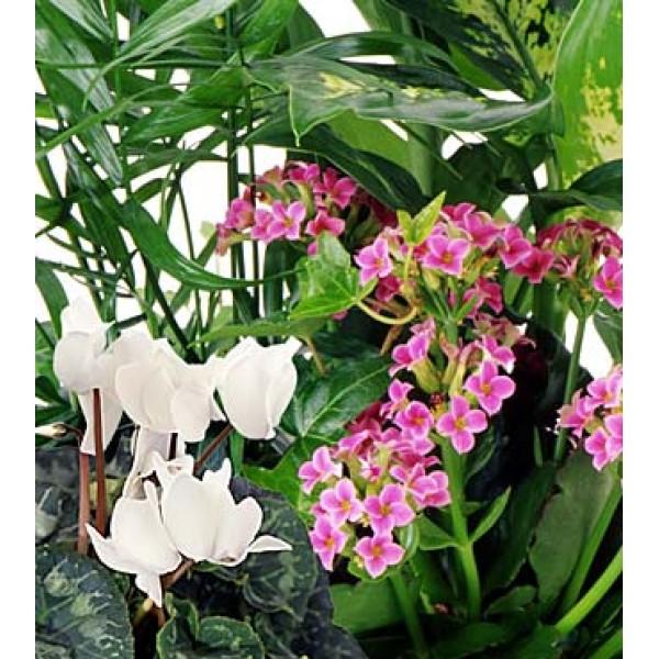 vous ne pouvez vous d cider quelle plante choisir laissez le fleuriste s lectionner la plus. Black Bedroom Furniture Sets. Home Design Ideas